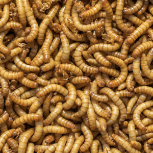 live mealworms Fishing Bait Fly Fishing Brid Food Reptile And Fish Feeder USA