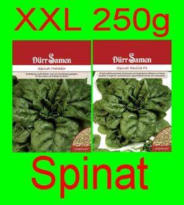 (3,96€/100g) 250 XL Packung Saatgut Samen Spinat Emilia F1 Oder Matador Gemüse