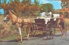 Barbados W I Old Donkey Drawn Buggy On Country Road Vintage Postcard Post Card