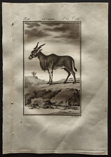 1799 - Buffon - Le Canna - Gravure zoologie