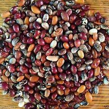 "Pussac Punay Andean Heritage Beans(1/4 lb Seeds) ""sleeping eight"" Heirloom !"