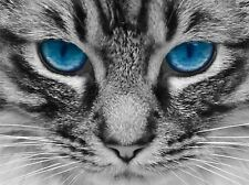 NATURE PHOTO CAT BLUE EYE TABBY PET POSTER ART PRINT PICTURE BB149A
