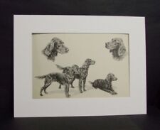 Irish Setter Portrait Matted Etching Print by Marguerite Kirmse 1938 LTD EDITION