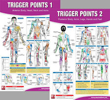 TRIGGER POINTS Professional Fitness Gym Physiotherapy Wall Charts 2 POSTER SET