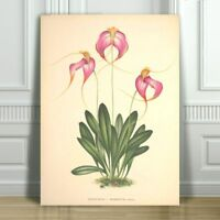 JEAN LINDEN - Beautiful Pink & Yellow Orchid #28 - CANVAS PRINT POSTER - 36x24""