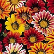 Gazania Sunshine Mix Annual Seeds