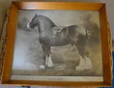 Framed 1890s Collectable Antique Photographs (Pre-1940)