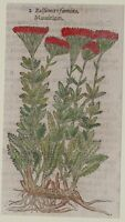 JOHN GERARD BOTANICA MATTHIOLI 1597 BALSAMITA FOEMINA ERBORISTERIA ERBE HERBS