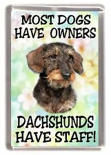 """Dachshund Wire Haired Dog Fridge Magnet """"Most Dogs...... Dachshunds Have Staff"""""""
