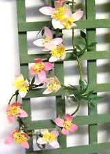 FLOWER KIT 'PINK CLEMATIS' Dolls House miniature garden plant flower 12th