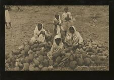 FIJI 1920s GOVT.PPC INDIAN LABOURERS...PINEAPPLES