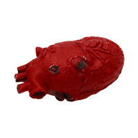 Realistic Latex Human Heart Prop Halloween Horror Accessory Laboratory Body Part