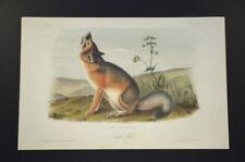 John James Audubon. Swift Fox. No 11. Plate 52. Quadrupeds of North America.