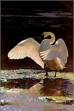 "Terry Isaac "" Into The Light Trumpeter Swan "" 398/1250 COA MINT $300 Value! 1992"