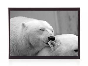 Cute Polar Bear Grey Greyscale Print Photo Picture A4 Landscape Decoration