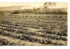 Farmer in Crop Field-Growing Plants-Barn-RPPC-Vintage Real Photo Postcard