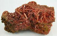 Large Electric Orange Crocoite Crystal Cluster Adelaide Mine Tasmania Australia