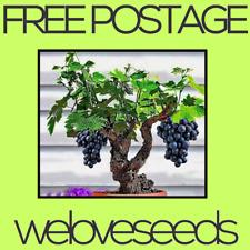 LOCAL AUSSIE STOCK - Mini Grape Vine, Bonsai Fruit Seeds ~10x FREE SHIPPING