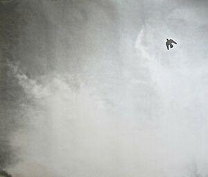 Felix Gonzalez- OFFSET LITHOGRAPH (BIRD) 1992-1993 **LAST COPY 4 SALE**lgbtq,gay