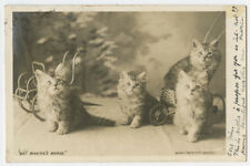 c 1903 Cute Little Cat Lying In Wait Kitten Early British photo postcard