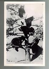 Bears Prince George British Columbia Canada Vintage RPPC Real Photo Postcard