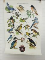 Smokey the Bear Poster Birds Thanks to You We Still Have a Home USDA USFS Vtg