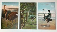 Vintage Postcards Cawston Ostrich Farm California - Lot of 3; No Writing