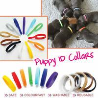 12 Farbe Welpen Welpenhalsband ID Halsbänder Set für Hunde Katzen Haustier