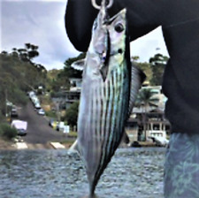Mulloway Lure Pike Bonito Flathead Snook Redfin Bream Bass Whiting Snapper Perch
