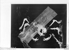 HORRORS OF SPIDER ISLAND 1960 ORIGINAL VINTAGE BW STILL PHOTO HORROR MONSTER SF