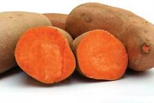 Sweet Potato 'Beauregard' (Yellow Flesh) x4 Unrooted Plant-/ Stem Cuttings