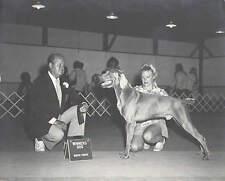 "Vintage Lot of 2 1970's Weimaraner Champion Show Dogs Black White Photo 8"" x 10"""
