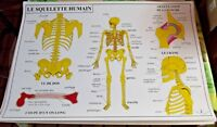 Ancienne Carte Scolaire édition Rossignol 2013 Anatomie Squelette les Muscles