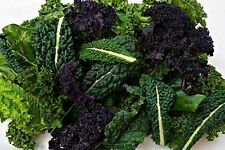 5 Varieties of Kale MIX.  Over 1,000 seeds.Heirloom  ***SAME DAY SHIPPING***