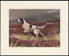 ENGLISH SETTER IN MOORLAND SCENE LOVELY DOG PRINT MOUNTED READY TO FRAME