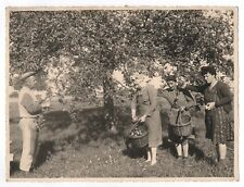 PHOTO ANCIENNE Cueillette de pommes Pommier 1944 Arbre fruitier Panier Récolte