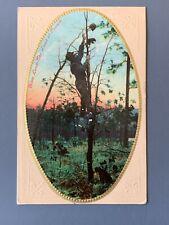 Dixie Land - The Land Of Possum Litho Postcard A1214090609
