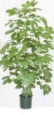 5.5' SCHEFFLERA ARTIFICIAL SILK PALM TREE PLANT DECOR BUSH FLORAL IN POT FLOWER