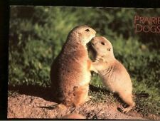 New! 1990s Color Prairie Dog Postcard No writing, Never Mailed!