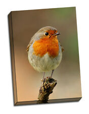 beautiful robin canvas print gift birthday framed picture bird christmas