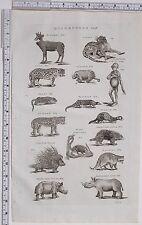 1788 ANTIQUE PRINT QUADRUPEDS PANTHER OTTER PANGOLIN PORCUPINE POLE-CAT CHIMP