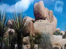 """Vivarium Terrarium palm stone fond 12"""" DE HAUT X 6 ft (environ 1.83 m) de large prix de l'offre"""