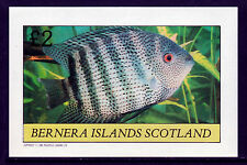 GB Locals - Bernera 3758 - 1982 TROPICAL  FISH imperf deluxe sheet unmounted