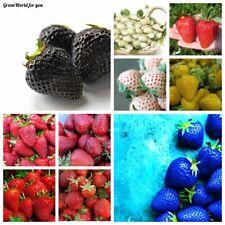 100 Strawberry Fruit Seeds 10 Kinds Juicy Perennial Organic Plants Good Harvest