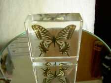 "Asian Swallowtail Butterfly Paperweight Measures 3""x3""x1"" Buyitnow get free S/H"