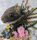 P32B Taxidermy Baby Bunny Rabbit Head Mount curiosities oddities collectible