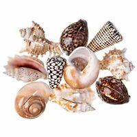 Nautical Decor | Sea Shell Placecard Holder Set | 20 Shell Card Holders