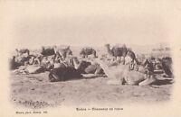 Algérie - cpa - BISKRA - Chameaux en repos