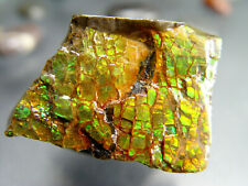 IMPERIAL AMMOLITE OPALIZED 144 Carats Fossil Gemstone Rainbow Cabochon Calgary
