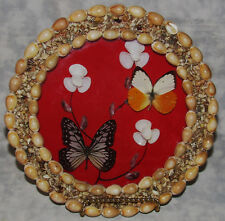 Round Vintage Sea Shell Shadow Box Frame with Butterflies